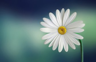 Daisy Flower Funny & Inspirational Photos